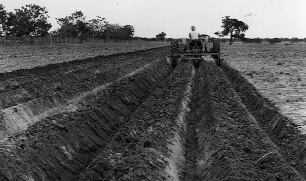 agriculture in the nigerian economy As nigeria's economy contracted in 2016, the country's agriculture sector took on even more importance long touted as a remedy to the west african nation's.